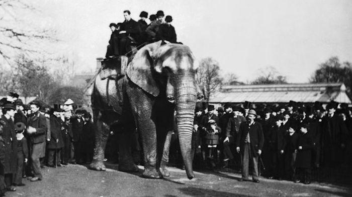 A trágica história de Jumbo, o elefante mais famoso do mundo, que inspirou Disney e apelidou avião
