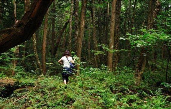 Como é o Aokigahara, macabro 'bosque de suicídios' japonês no centro de uma polêmica no YouTube