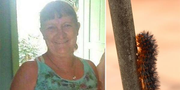 Mulher sofre com sintomas e morre dias após encostar em inseto peludo, no PR