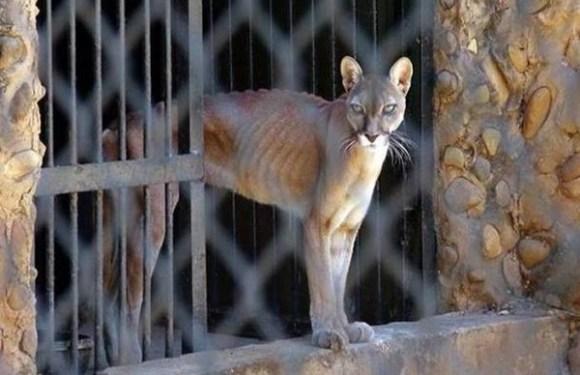 Animais em perigo de extinção morrem de fome em zoológico da Venezuela