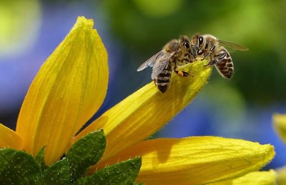 Walmart tenta patentear tecnologia de abelhas robóticas, ao estilo 'Black Mirror'
