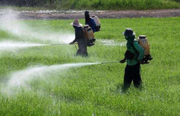 Anvisa libera uso de agrotóxico no Brasil que pode causar danos graves ao sistema nervoso