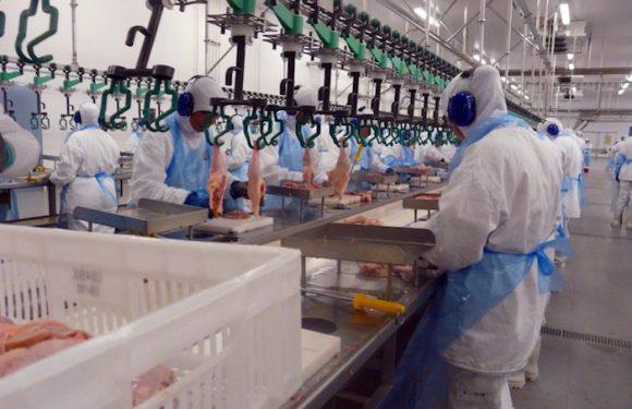 União Europeia veta importação de carne de frango de 20 frigoríficos do País e atinge em cheio o Paraná