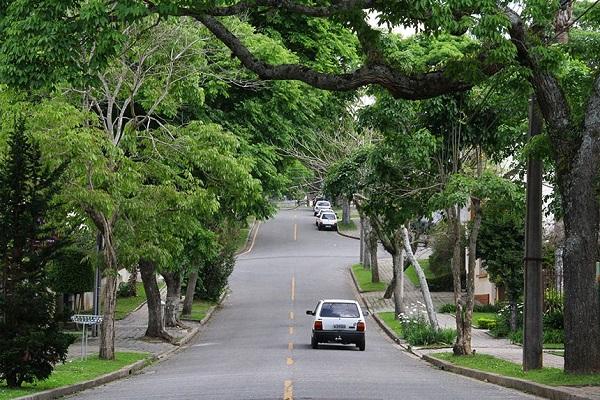 Multas por infração ambiental podem ser destinadas à arborização urbana