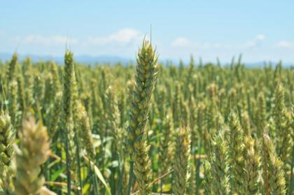 新麦コレクションのシンポジウム〈小麦・未来・展望2015〉