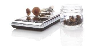 Microdosing Mushrooms for Pain