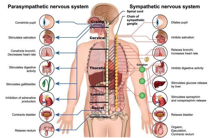 Peripheral Neuropathy Chart