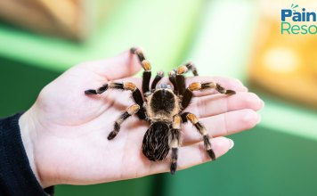 Tarantula Venom chronic pain