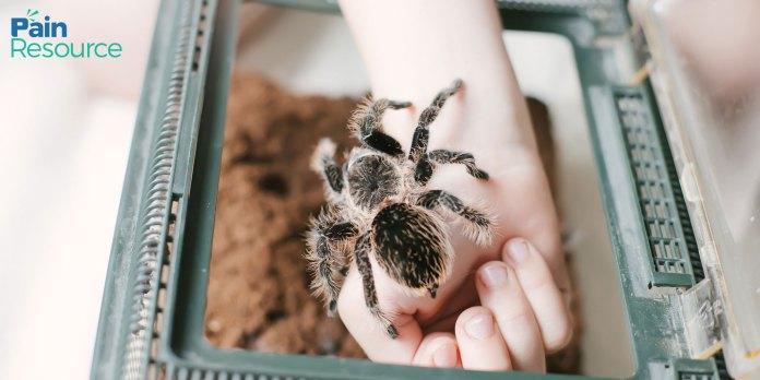 Tarantula Venom