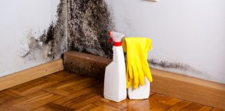 how to spot black mold