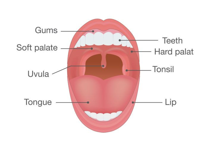 Sleep Apnea info on soft palate