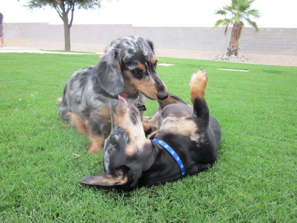 Puppies 2012 (64)