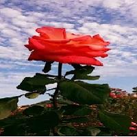 اروع واجمل صور خلفيات شاشه من الطبيعة كمبيوتر ويندوز ايفون