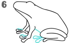 رسم ضفدع للتلوين سهل بالرصاص للمبتدئين draw frog