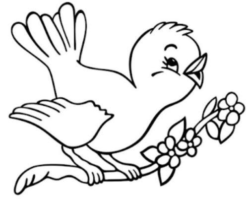 تلوين طيور جميله وكيوت للاطفال عصفوره