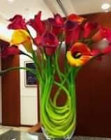 خلفيات أزهار طبيعية