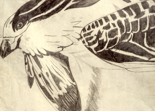 Drawing showing closeup of a bird's face