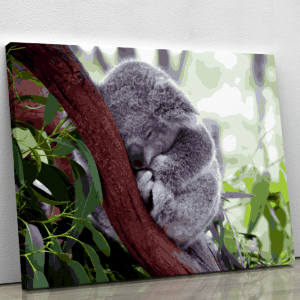 Our Exclusive Design – The Sleeping Koala