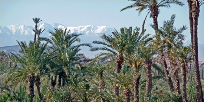 Palmerie de Marrakech2