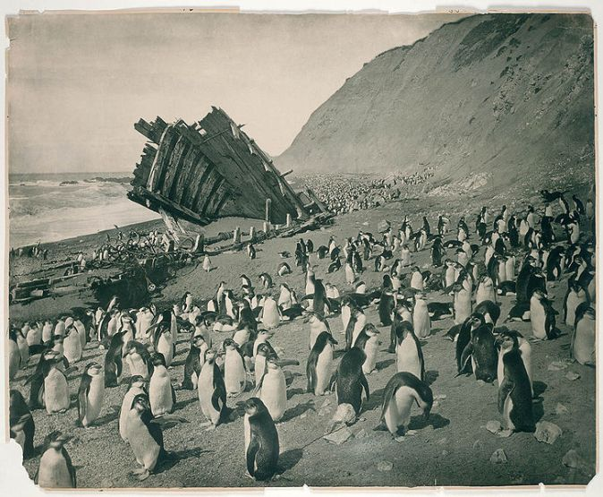 729px-wreck_of_the_gratitude_macquarie_island_1911
