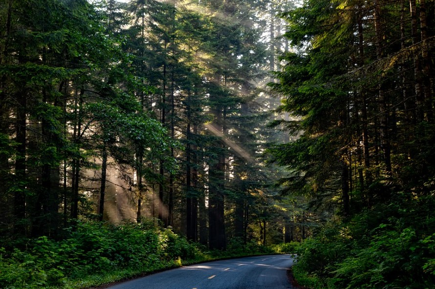 forest-1598756_960_720
