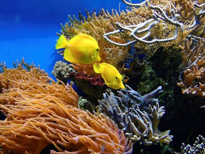 coral-1355474_960_720
