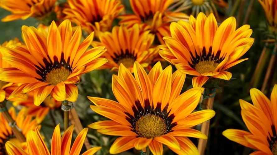beautiful-flowers-1853562_960_720