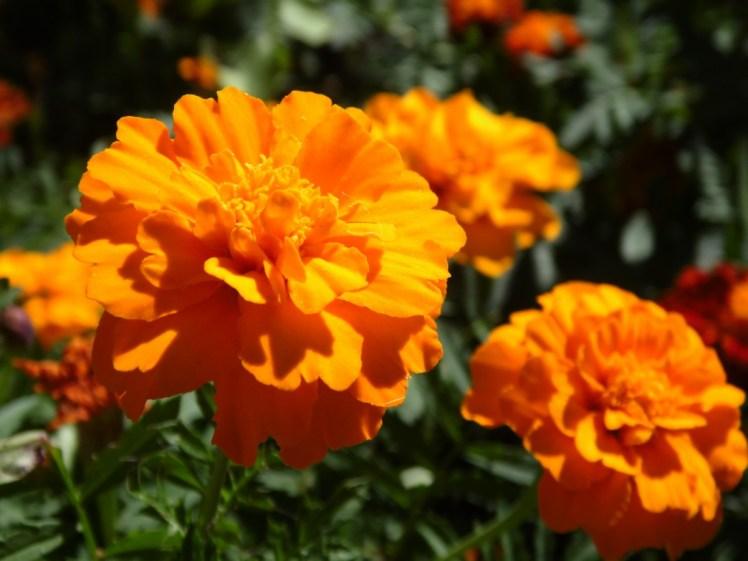 flowers_flower_summer_flowers_nature_beautiful_flower_garden_flowers_bloom_plant-681998.jpg!d