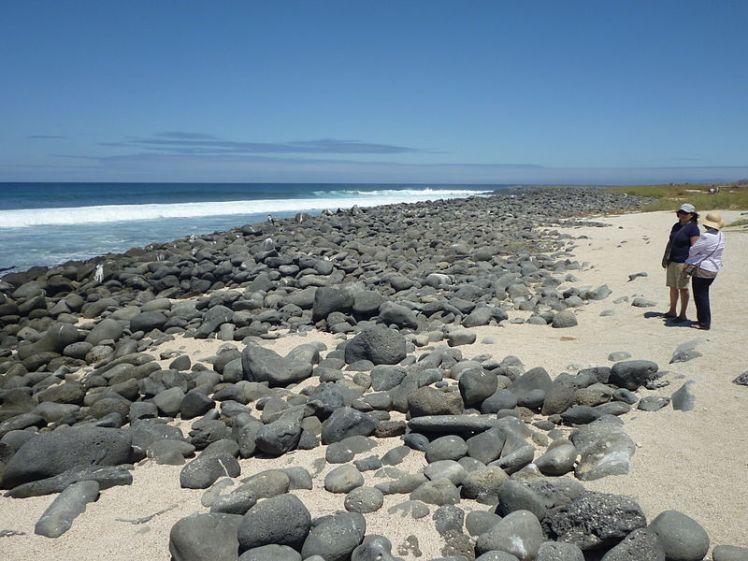 800px-Beach_in_North_Seymour_Island_Galapagos_photo_by_Alvaro_Sevilla_Design.