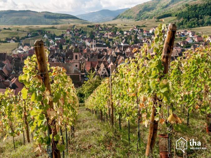 Colmar-Les-vignes-de-riquewihr-proche-de-colmar