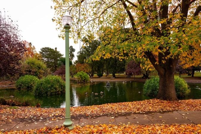 Seasons Foliage Fall Sacramento Autumn California
