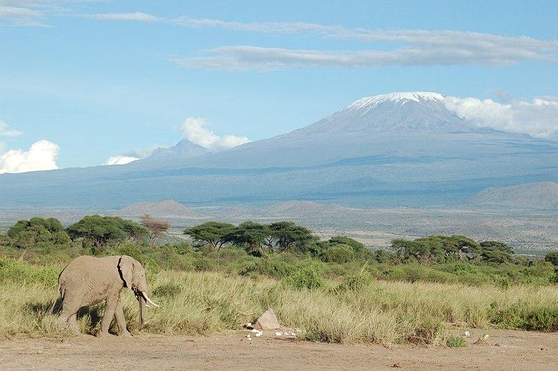 800px-Elephant_and_Kilimanjaro