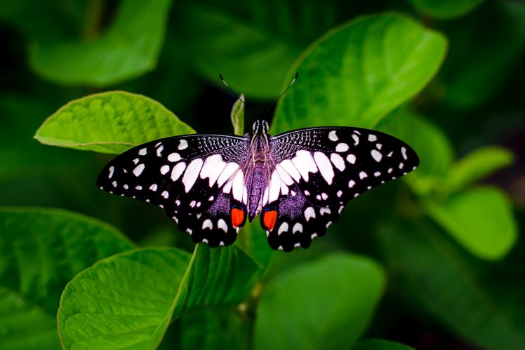 close-up-photography-of-a-butterfly-672142
