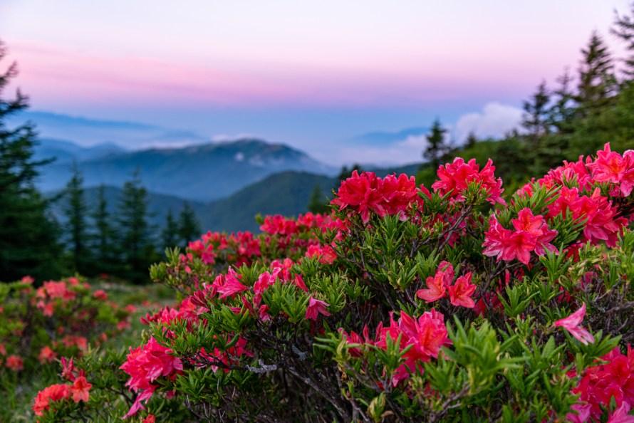 flower-flowering-plant-nature-natural-landscape-plant-vegetation-1594367-pxhere.com