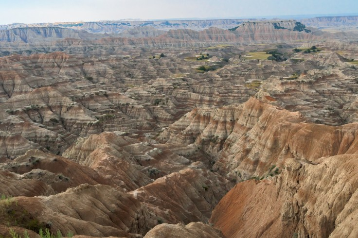 geotagged-south-dakota-united-states-usa-wall-animal-1454135-pxhere.com
