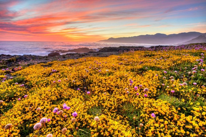 shoreline-landscape-with-yellow-flowers-with-dusk-sky-in-california_800