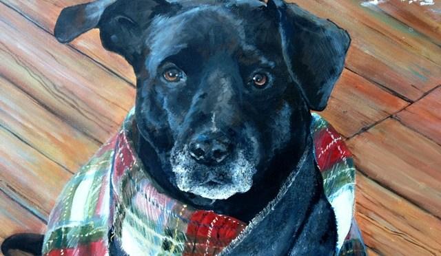 Dog Portrait: Barney with a Scarf