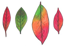 Day-17-Fall-Leaves