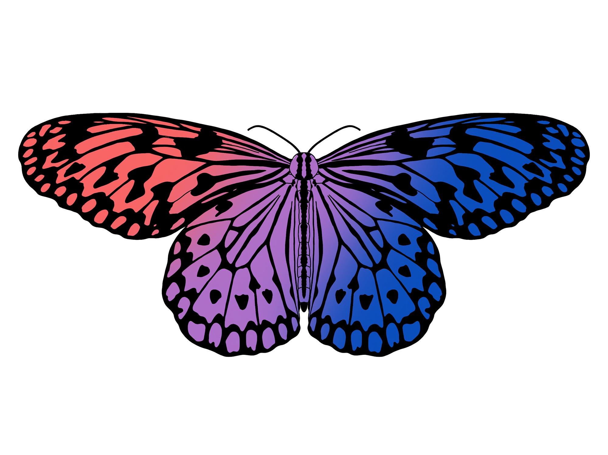 Butterfly Artwork By Kat Sanders