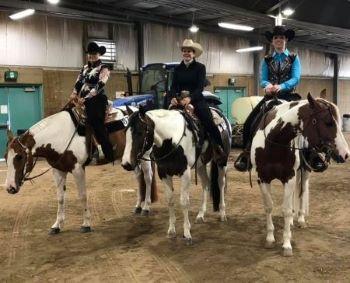 Paint show horses