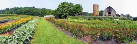 LynnVale  Flower Farm