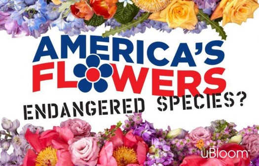 american  flowers endanged