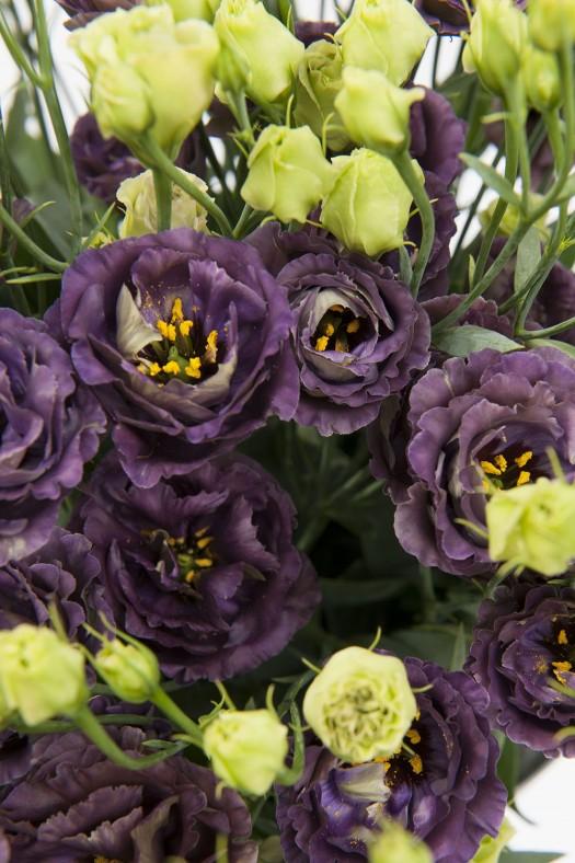 lisianthus-rosanne-black-pearl-2