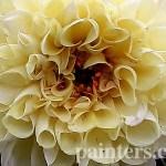 Заказать картину-Цветы6