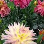 Картина на заказ-цветы8