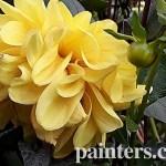 Картина на заказ-цветы9