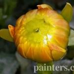 Купить картину-Цветы17