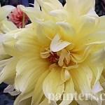 Купить картину-Цветы18