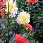 Купить картину-Цветы9