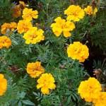Фото-Цветы,заказать картину,цветочный пейзаж,натюрморт